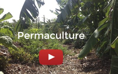 Integrating Permaculture Principles